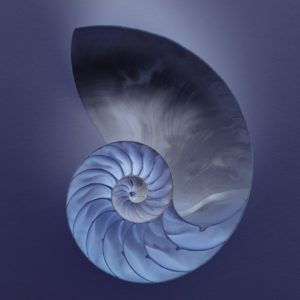 Pantheisms Symbol is The Nautilus Shell